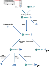 purification of protein
