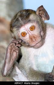 photographs of monkeys