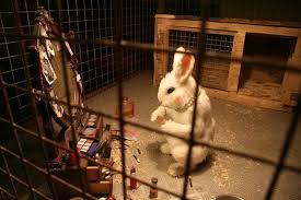 cosmetics tested on animals