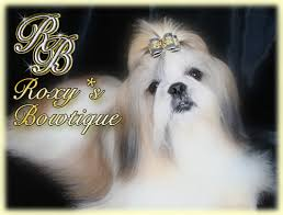 luxury dog boutique