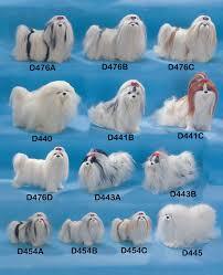 lhasa apso grooming styles