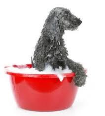 dog grooming baths