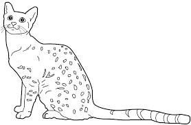 egyptian cat drawings