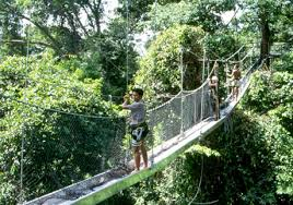 canopy walkways