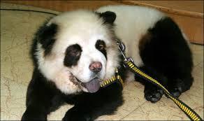 pet pandas