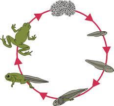 life cycle of an animal