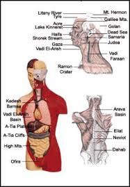 map of human organs