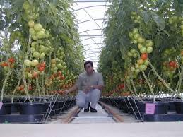 pot hydroponics