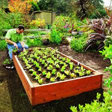 pictures of raised bed gardens