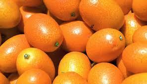 http://t0.gstatic.com/images?q=tbn:4WA84_zaeu1atM:http://arxxiduc.files.wordpress.com/2007/07/kumquats.jpg