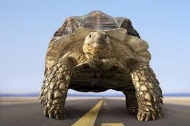 animation turtle