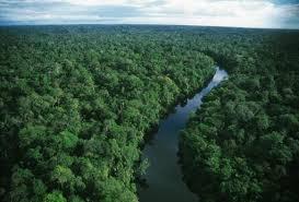rainforests amazon