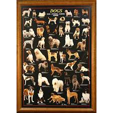 breed dog