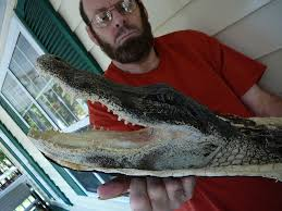 alligator rugs