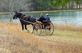 draft horse cart