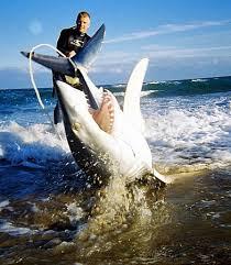 mako shark pics