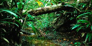 amazon rainforest photos