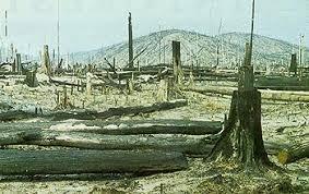 cut down rainforest
