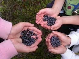 huckleberries