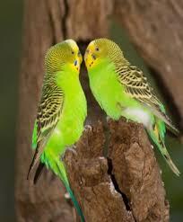pet birds pictures
