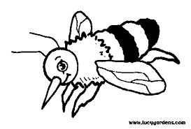 honeybee garden