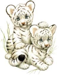 cartoon cubs