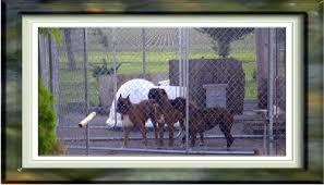 breeding kennels