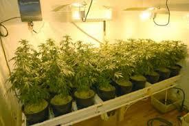 marijuana video