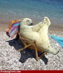 polar bear global warming
