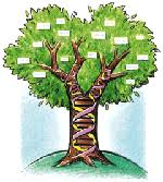 arvores genealogicas
