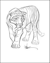 drawings tiger