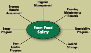 food safety images