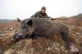 hog ranch