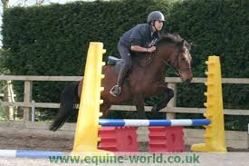 pony jumps