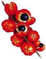 guarana fruta