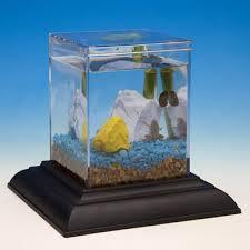 eco aquarium