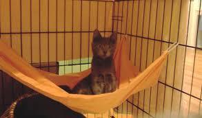 animal hammocks