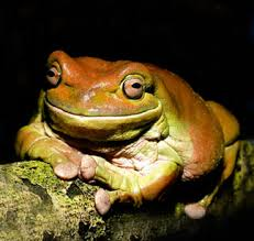 frogs and toads pictures
