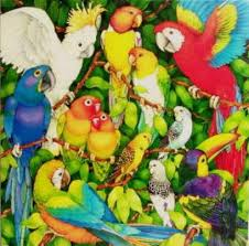 birds of the jungle