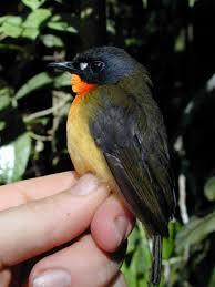 bird specie