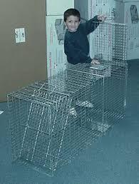 coyotes traps