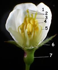 perfect flower