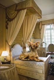 chihuahua bed