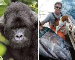 animals in endangered