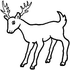 coloring pages deer