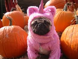 costumes for pugs