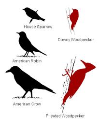 bird sizes