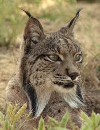 10 rarest animals