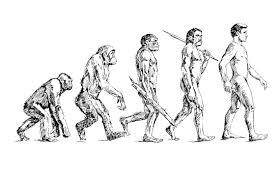 human evolutionary