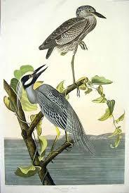 birds of america audubon